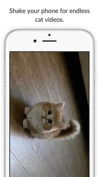 Cat Shake
