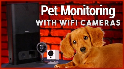 How to Keep an Eye on Your Pets With WiFi Cameras