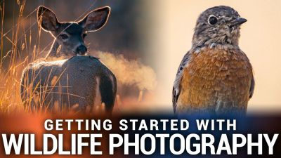 Getting Started With Wildlife Photography